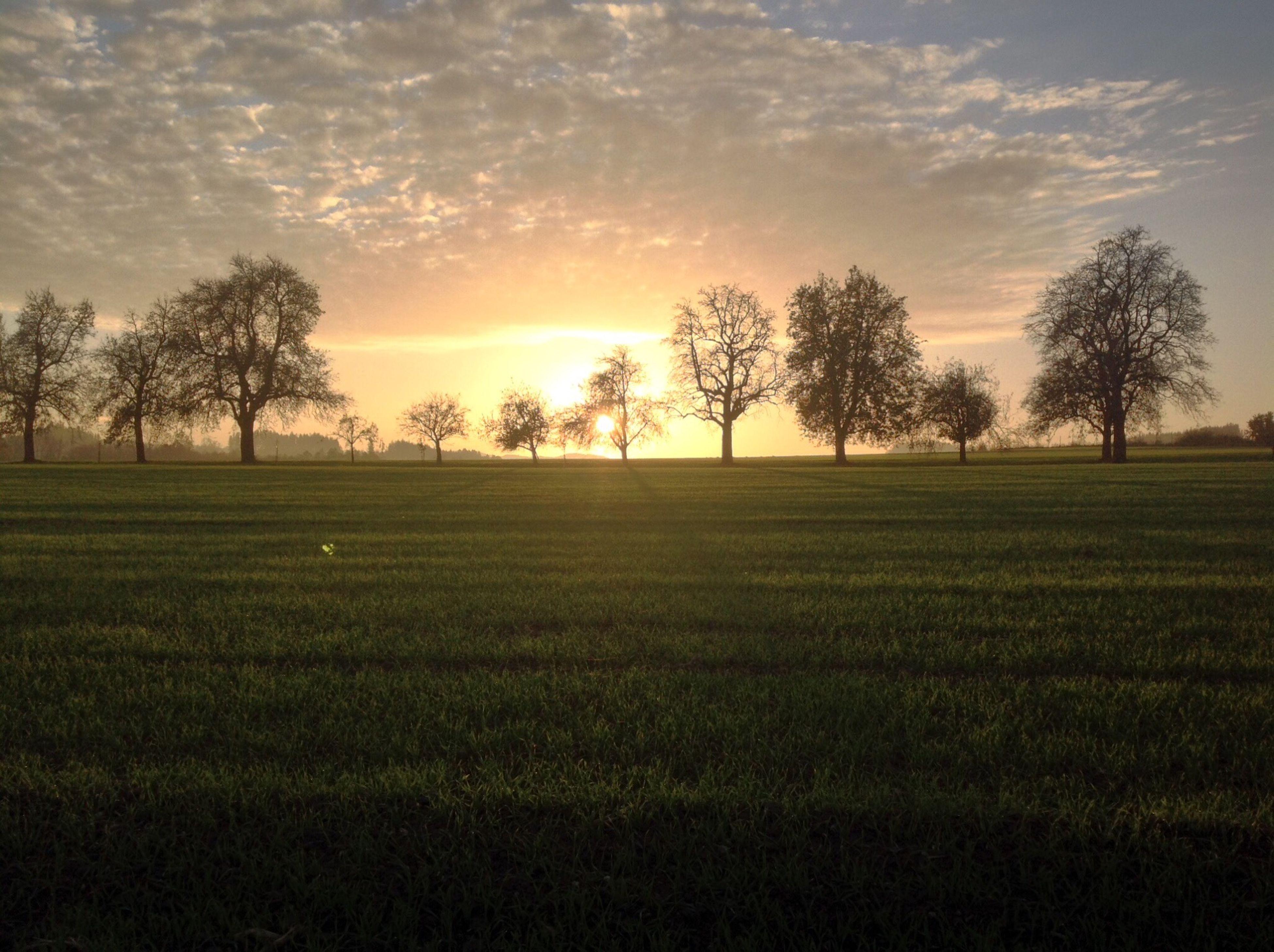 sunset, field, tree, tranquil scene, tranquility, landscape, scenics, sky, beauty in nature, grass, nature, growth, grassy, silhouette, sun, idyllic, rural scene, cloud - sky, orange color, sunlight