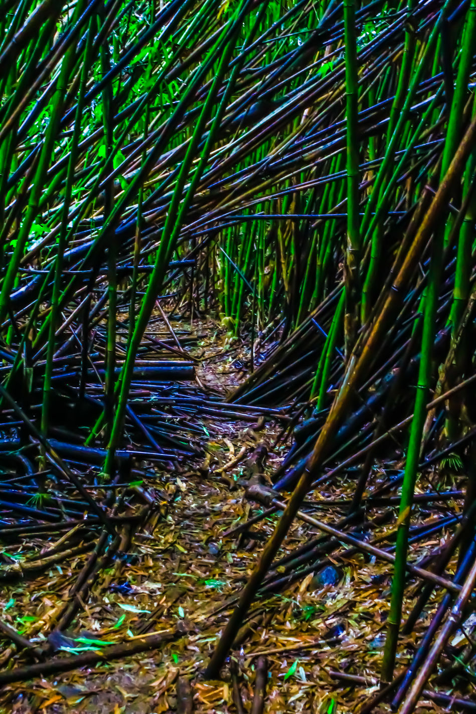 Abundance Bamboo Bamboo Tunnel Change Close-up Dry Farm Field Forest Tunnel Full Frame Glowing Grass Growing Growth Nature No People Outdoors Plant Stem Tropical Climate Uncultivated