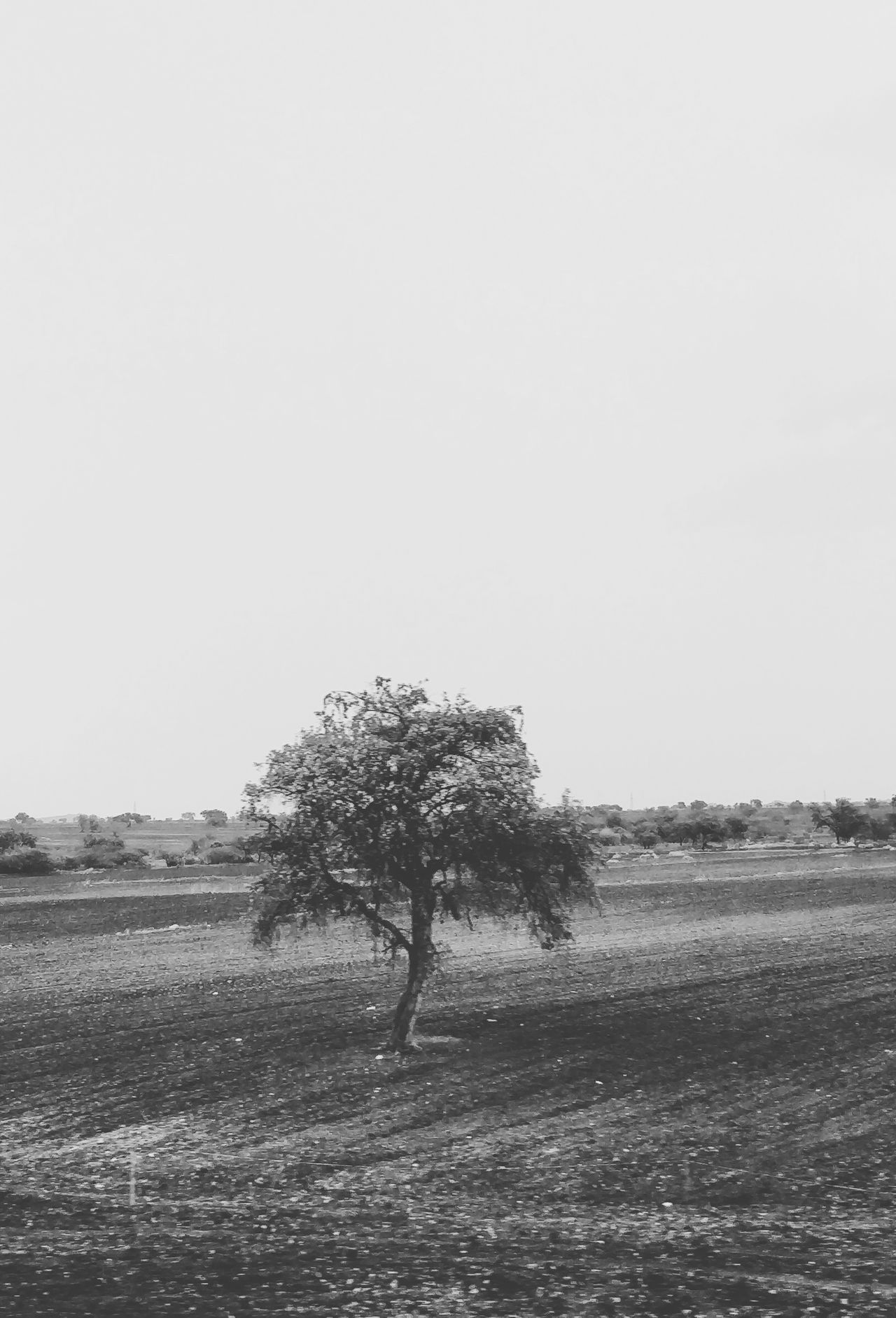 Tree Nature Field Beauty In Nature Outdoors Agriculture Landscape No People Day Sky Blackandwhite Bnw India Monochrome TheWeek On EyEem Landscape_Collection Clearsky Karnataka