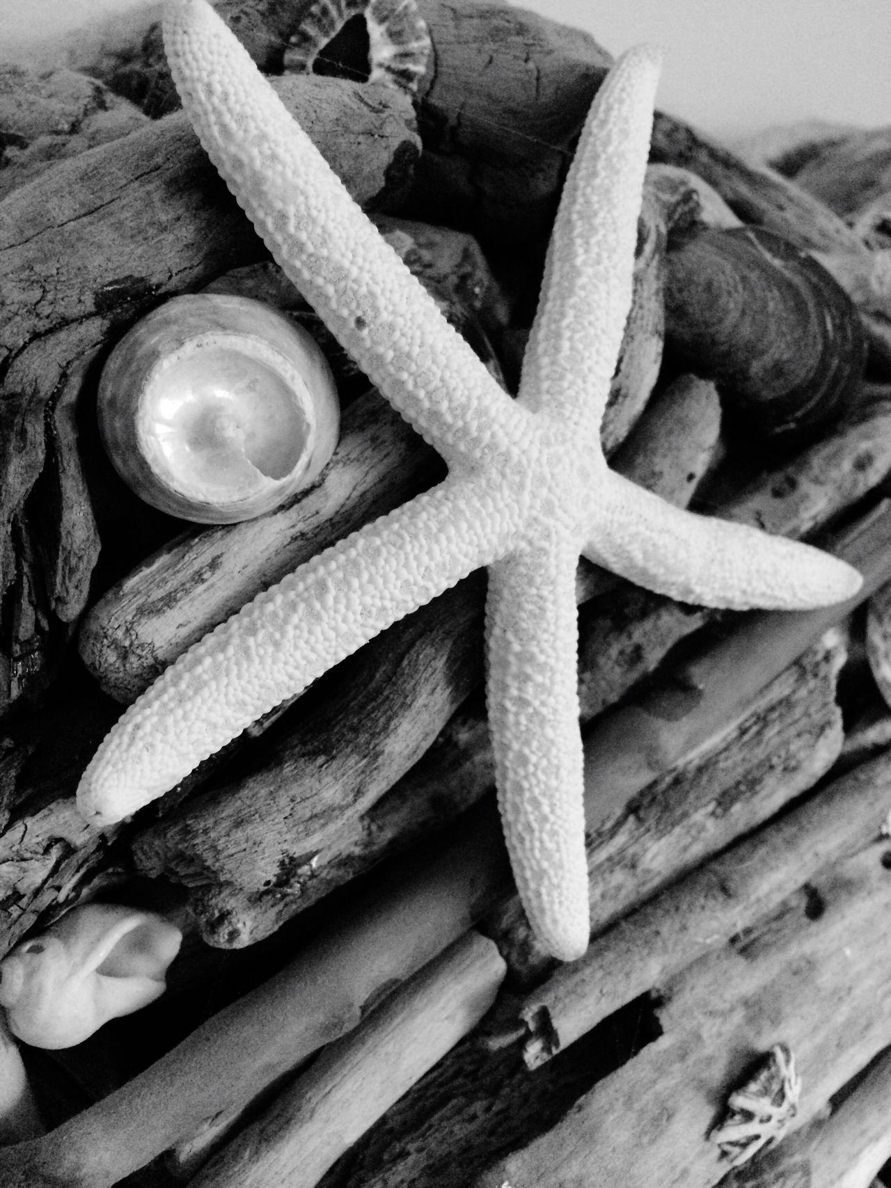 Star a drift Starfish  Driftwood Close-up No People Indoors  Day Freshness Sea Seaside Driftwood Art Starfish At Beach Nature