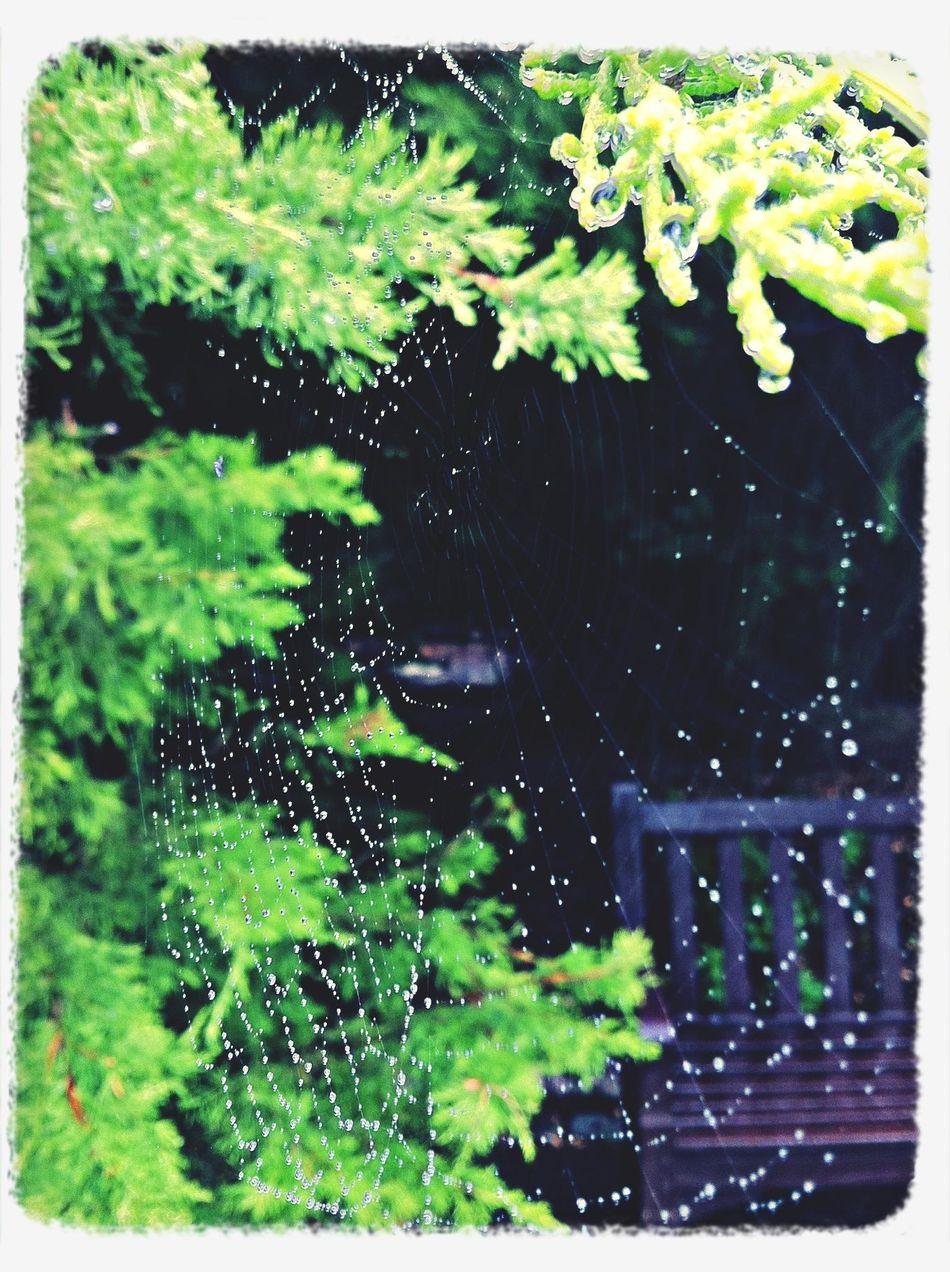 Spiderweb Spider Web Rainy Days Raindrops Cold Temperature Beautiful Nature