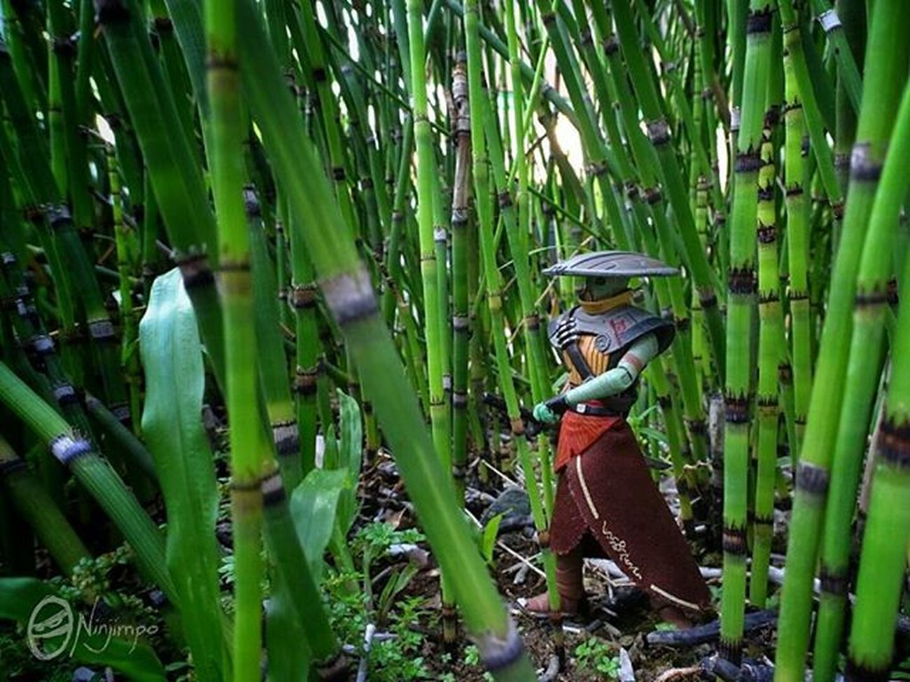 The Ronin of the Bamboo Forest. Afaa AfaaNinjimpo Embo Starwars Bountyhunter Theclonewars Tcw Starwarstheclonewars Starwarstoyphotography Epictoyart Toyspot Toyspotcollector Toptoyphotos Toyartistry Toygroup_alliance Tytoń Toydiscovery Toycrewbuddies Toyphotography