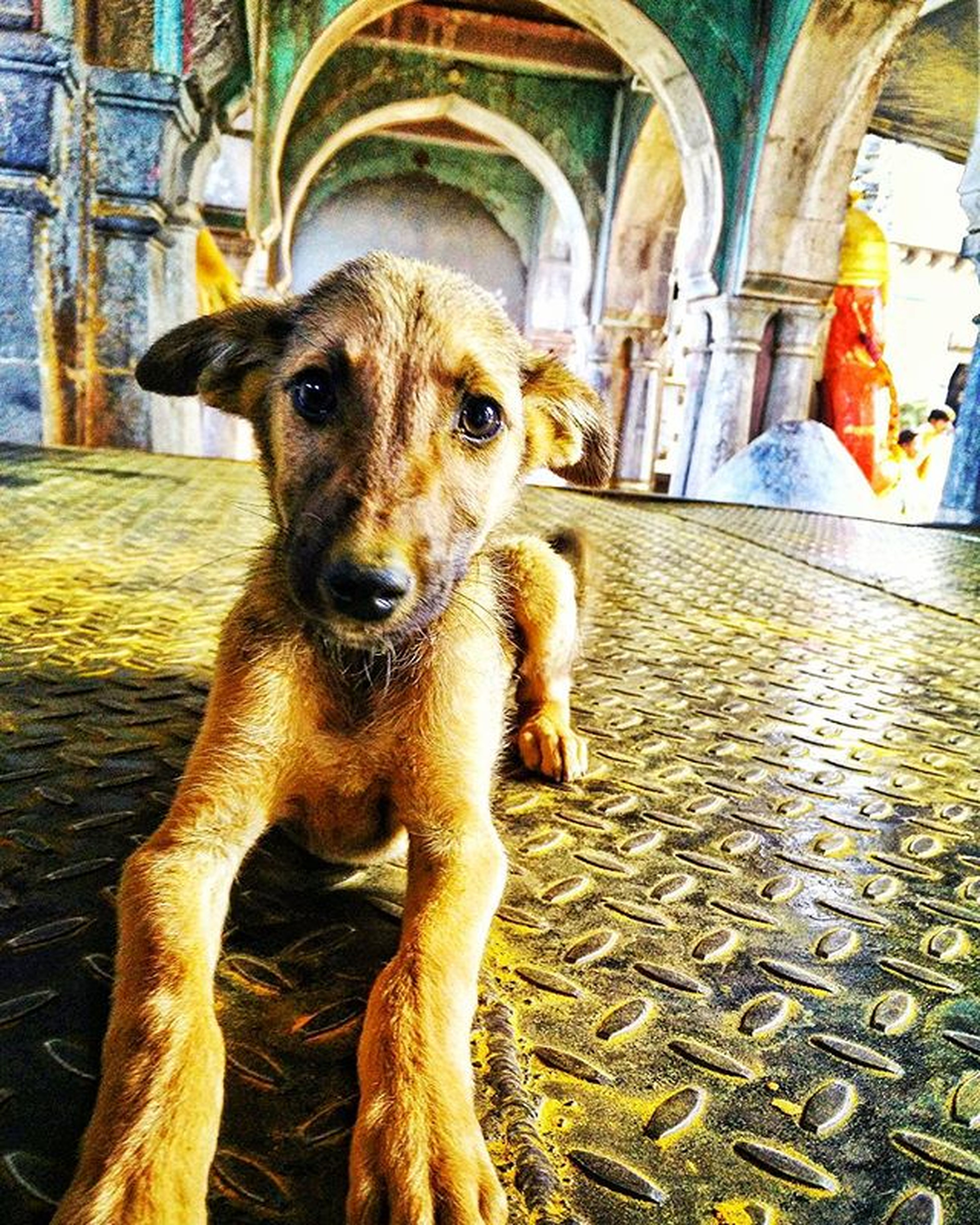 It's a rare sight to find a cute puppy bathed in turmeric... Could only happen in Sonyachi Jejuri 😍😍 Yelkot Yelkot, Jai Malhar ☺