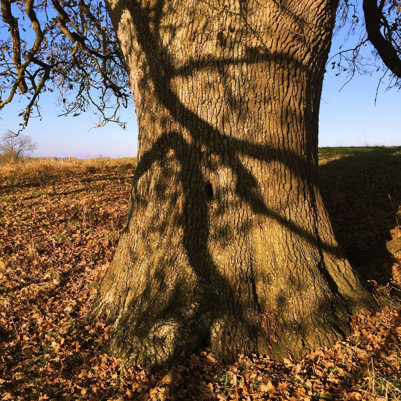 Shadow on old oak tree trunk Tree Nature Sunlight Growth Tranquility Tree Trunk Outdoors Shadow No People Field Day Tranquil Scene Beauty In Nature Landscape Scenics Sky Oak Oaks Bark Texture Shadow Shadows Nature Countryside Trees