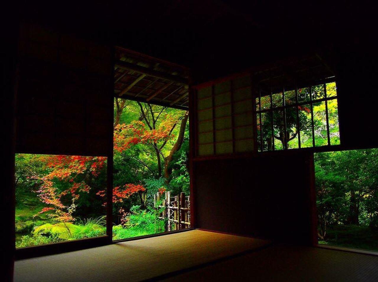 Kyoto Autumn 京都 日本 日本庭園 美しい ワビサビ 紅葉 風流 静か Kyoto Japan No People Plant Tree Beautiful Autumn Wabi-sabi Japanese Garden Nature Moss 自然 Temple