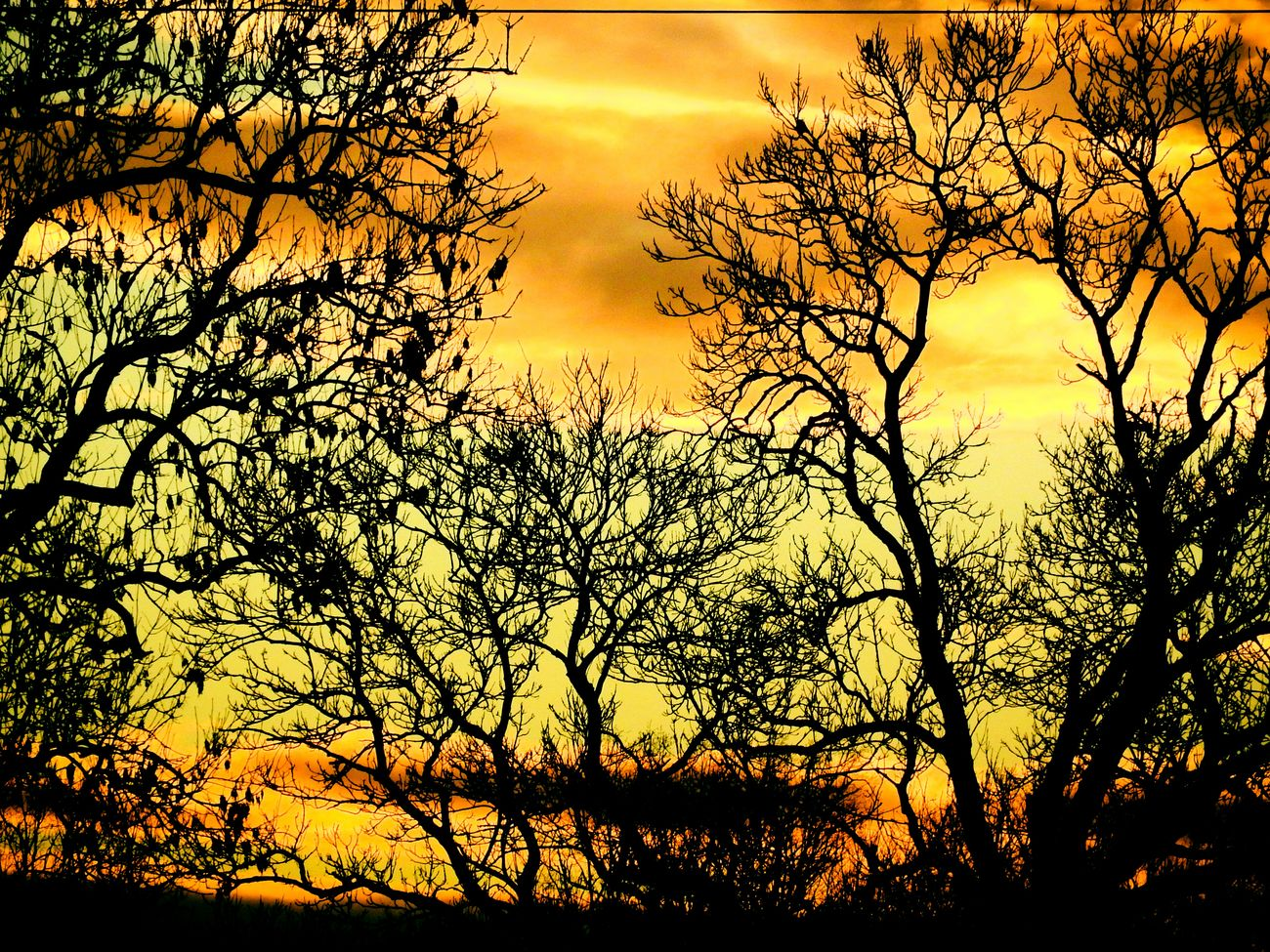 EyeEm Nature Lover Sunset✨trees✨ Sunsetlovers Sunset Silhouette Bare Tree Tranquil Scene Branch Scenics Tranquility Beauty In Nature Tree Cloud - Sky Sky Orange Color Nature Idyllic Tree Trunk Majestic Dramatic Sky Outdoors Growth Cloud
