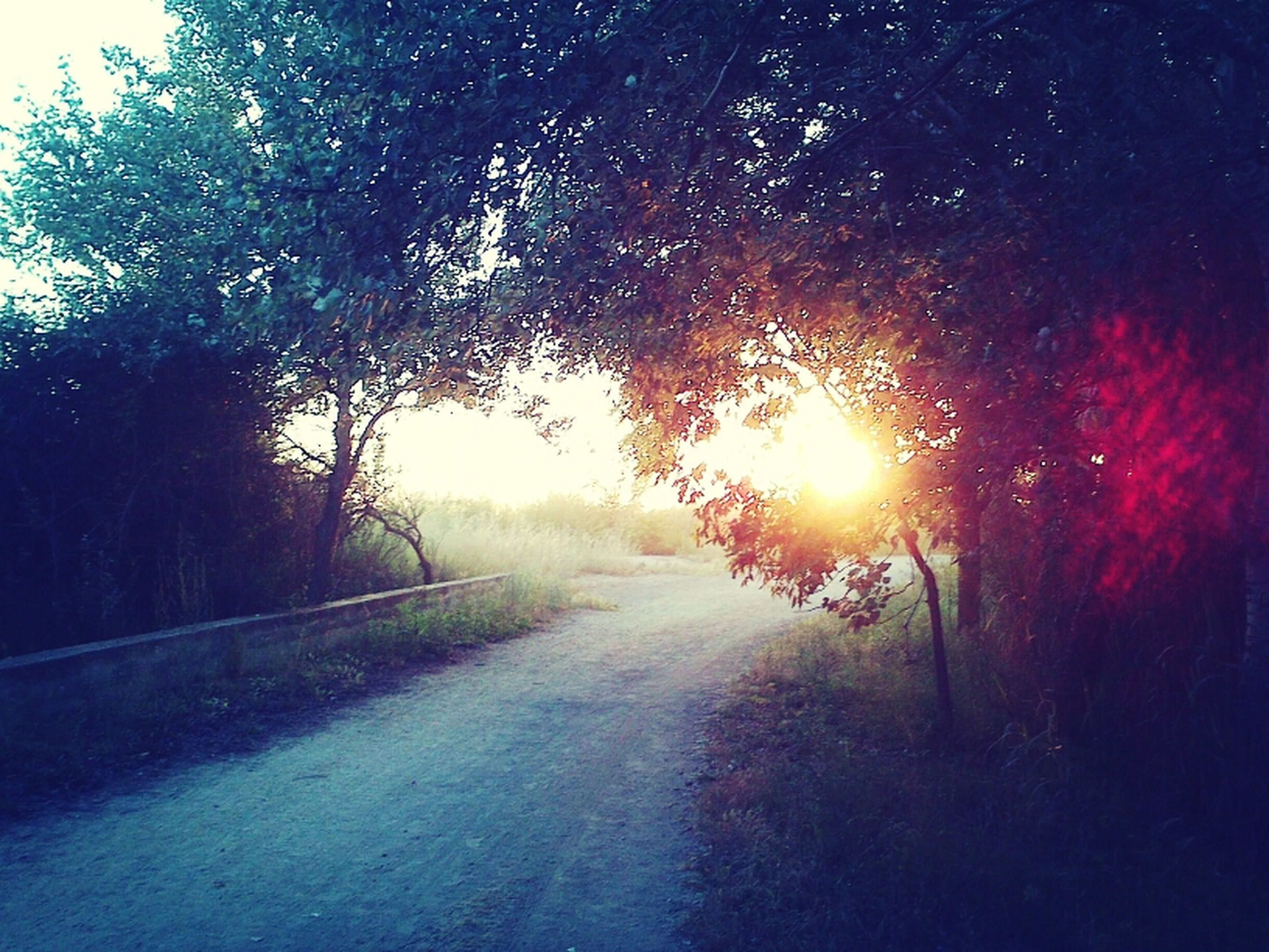 the way forward, road, tree, transportation, diminishing perspective, vanishing point, tranquility, sun, sunlight, country road, tranquil scene, nature, empty road, sky, sunset, street, beauty in nature, empty, scenics, no people