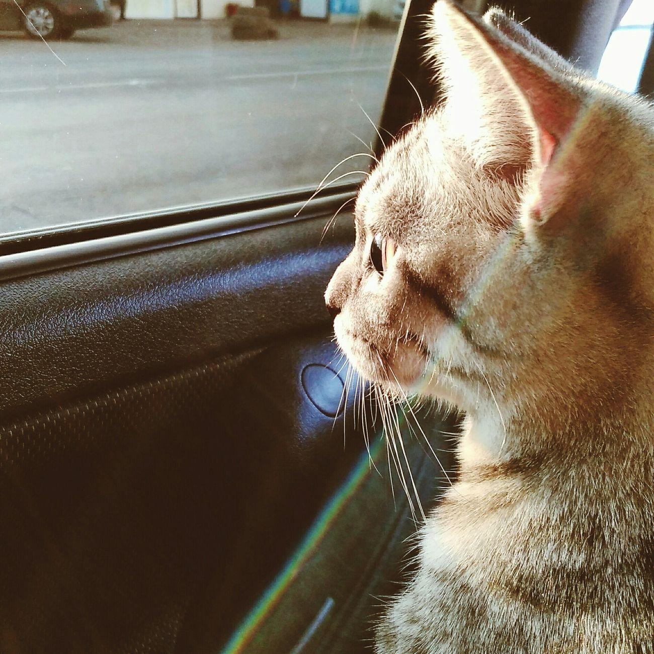 Cat♡ Love ♥ Zevs