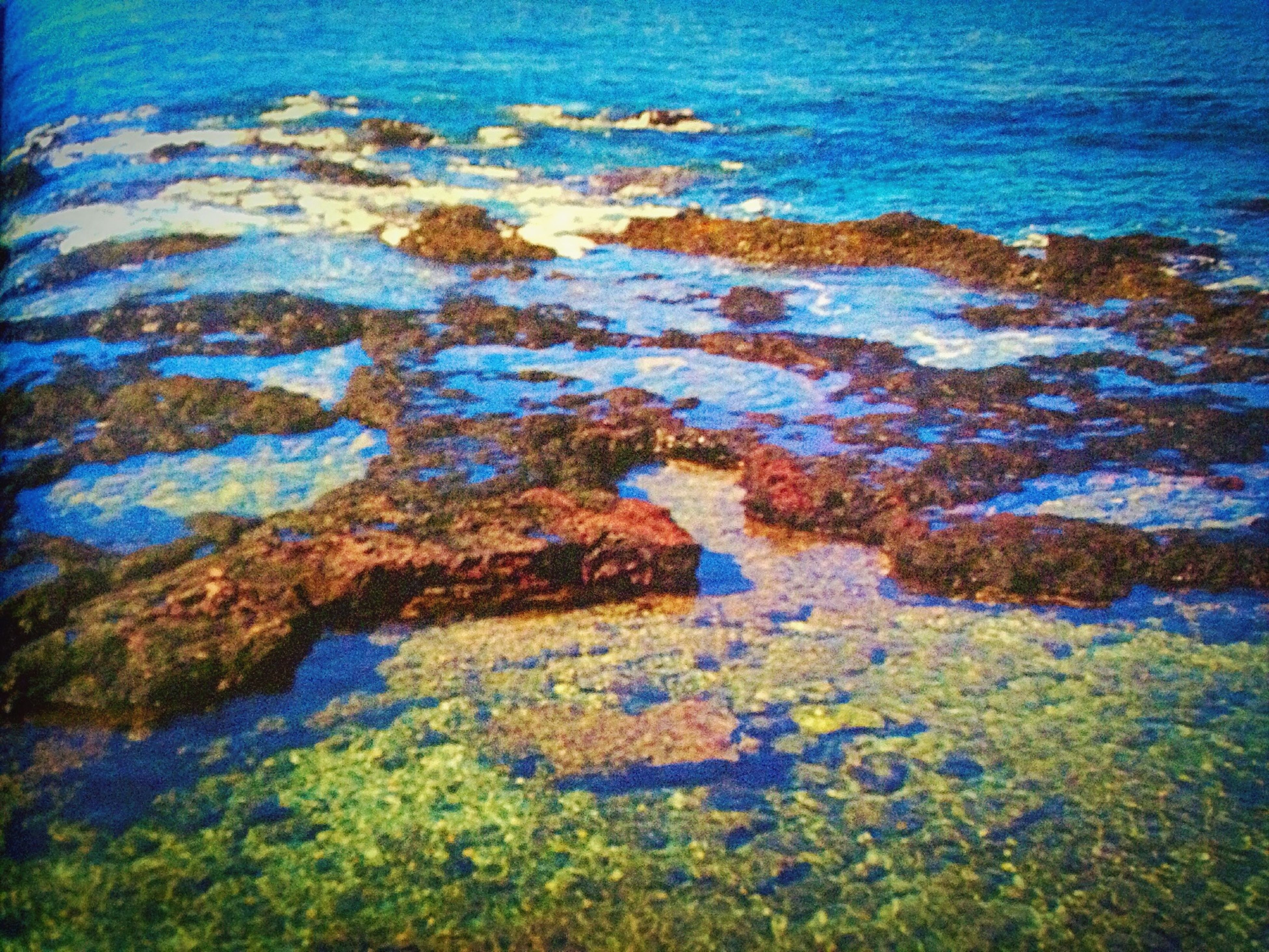 blue, water, rock - object, nature, high angle view, rock formation, beauty in nature, sea, textured, tranquility, plant, moss, rough, growth, rock, day, no people, outdoors, tranquil scene, scenics