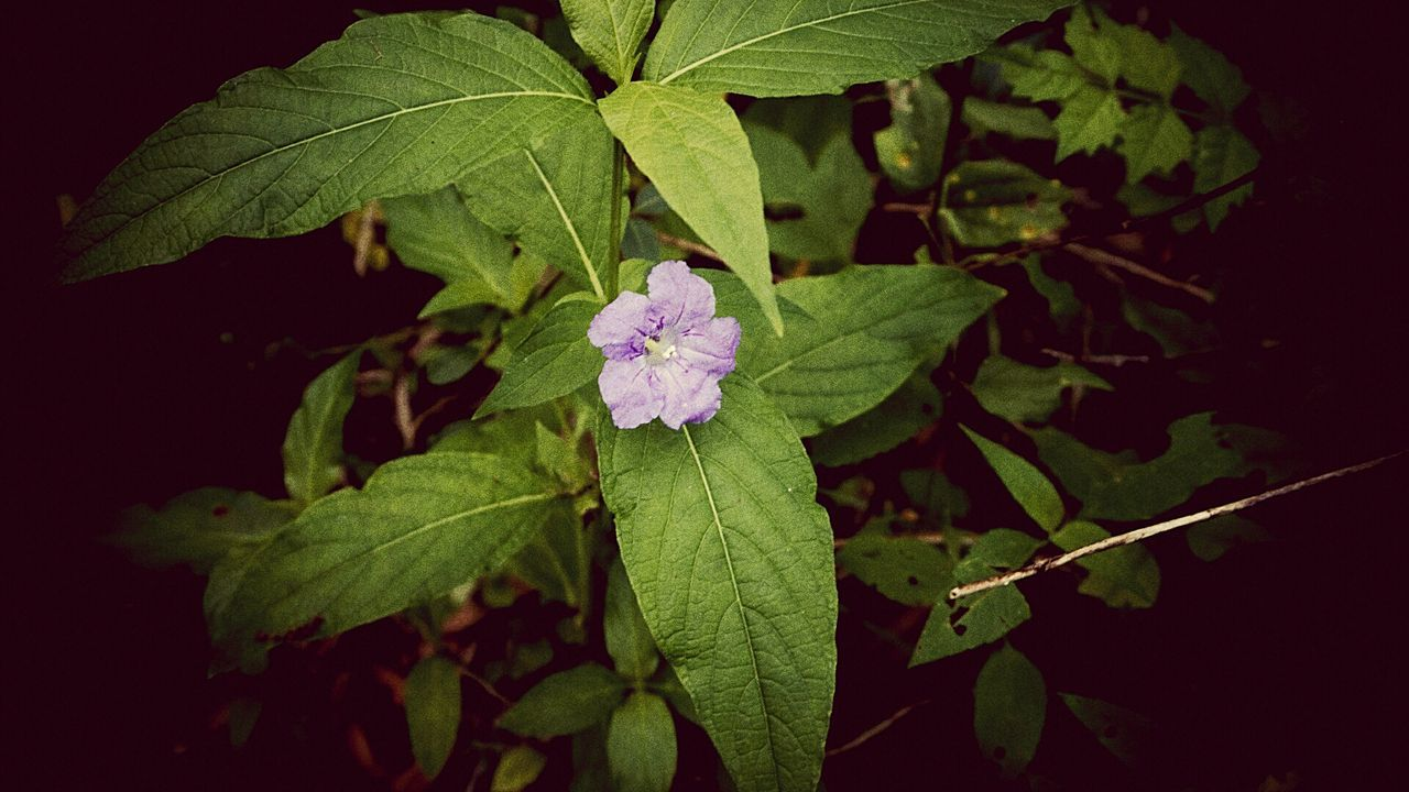 leaf, green color, growth, beauty in nature, nature, flower, no people, freshness, fragility, outdoors, plant, close-up, day, flower head, periwinkle