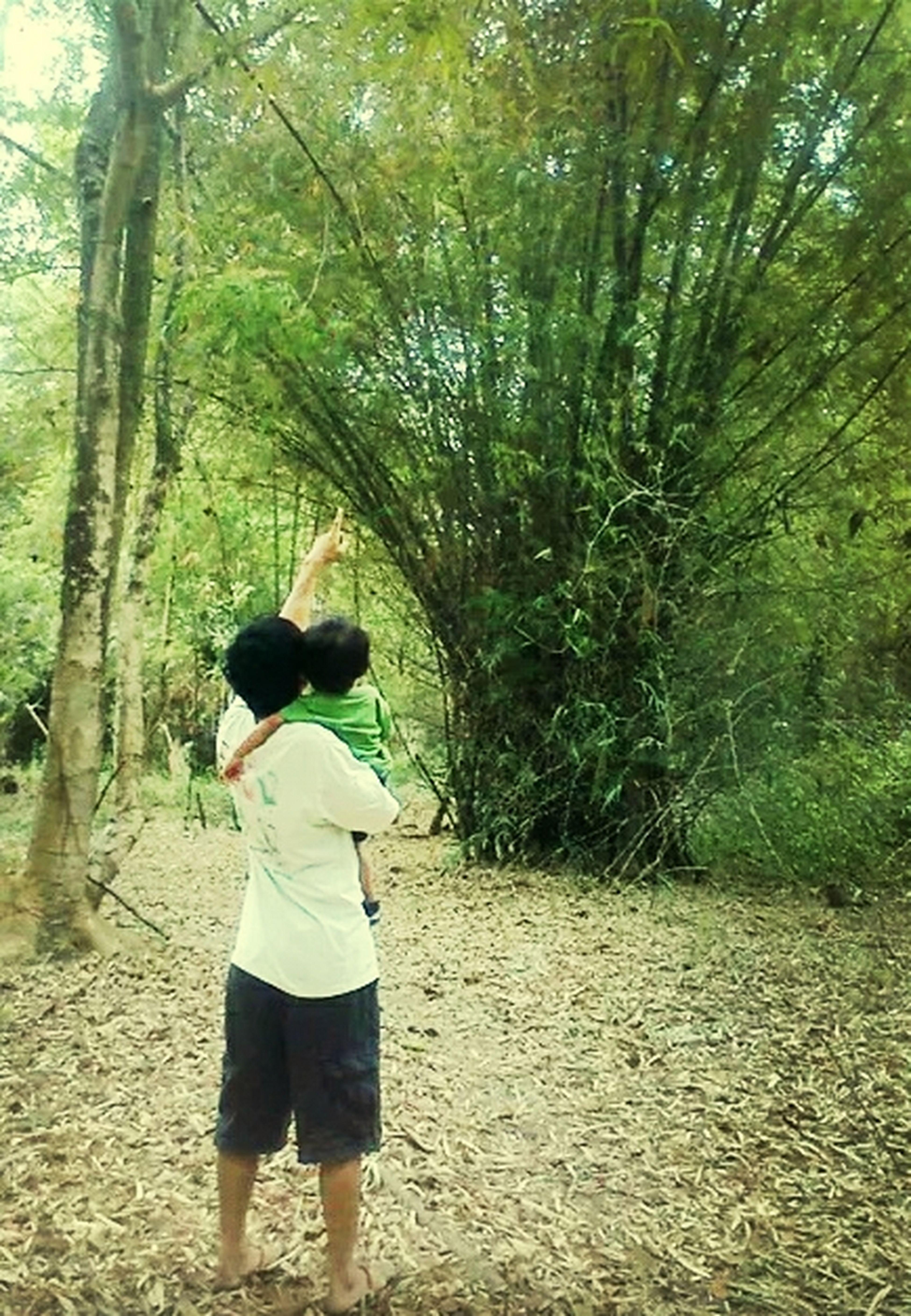 """""""...be strong like a bamboo trees..someday when you grow up you'll encounter diffrent storms in life..even if it pulls you down on the ground ..be brave to stand up again and again... """" Greenlife"""