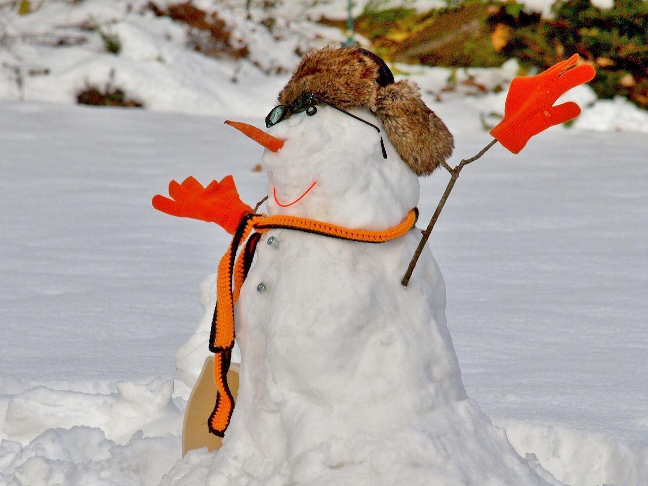 Beautiful stock photos of snowman,  Animal Themes,  Animal Wildlife,  Animals In The Wild,  Carrot