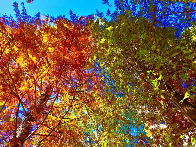 Fall days make my heart happy. Showcase: December Share Your Adventure Fall Days Beautiful Day Exploring New Ground Fall Foliage Autumn Colors Autumn Leaves