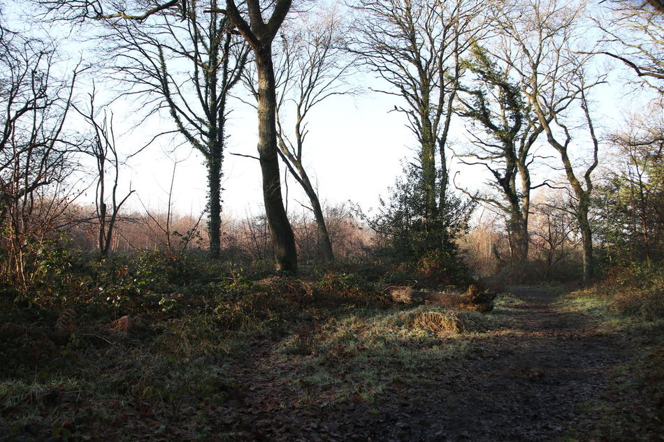Bare Tree Beauty In Nature Bookham Branch Common Day Grass Growth Nature No People Outdoors Scenics Sky Sun Through Trees Surrey Countryside Tranquil Scene Tree Walking Winter