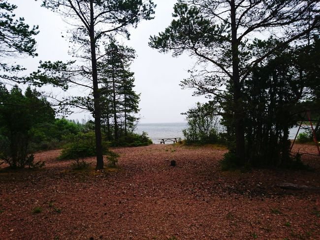 Documenting Swedich East-coast Landscapes Gästrikland Archipilago Baltic Sea Shoreline Landscape_Collection Landscape_photography Landscape Sea Gävlebukten Check This Out Nature_collection Nature Nature Photography Trees Pine EyeEm Best Shots Eye4photography  EyeEm Gallery Enjoying Life Outdoors Natural Beauty Nature's Diversities