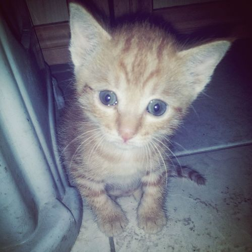 Phonecamera Cat Eyes