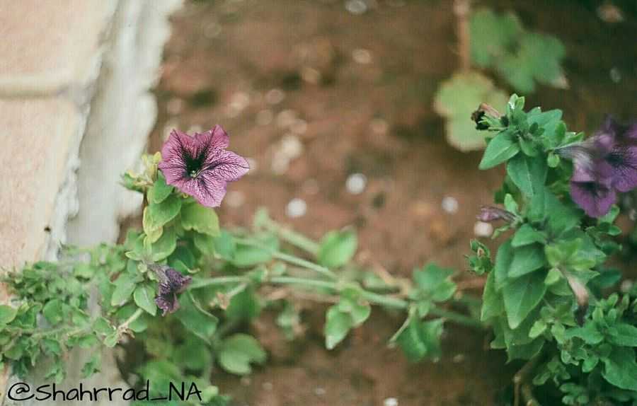 Art هنر Photography Photo Shahrrad_NA Flower