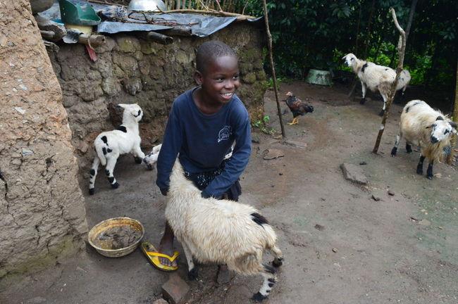 Africa African Animal Chevre  Smiling Togo Village