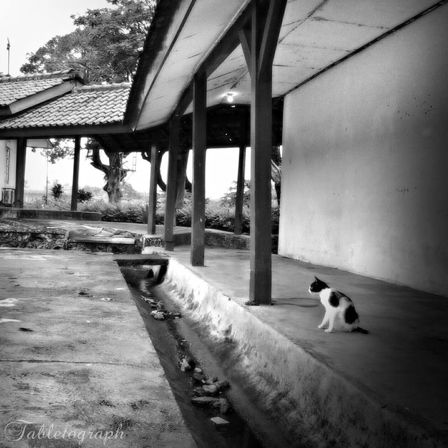 alone Bwphotography Blackandwhite Cat Animals Pets Corner