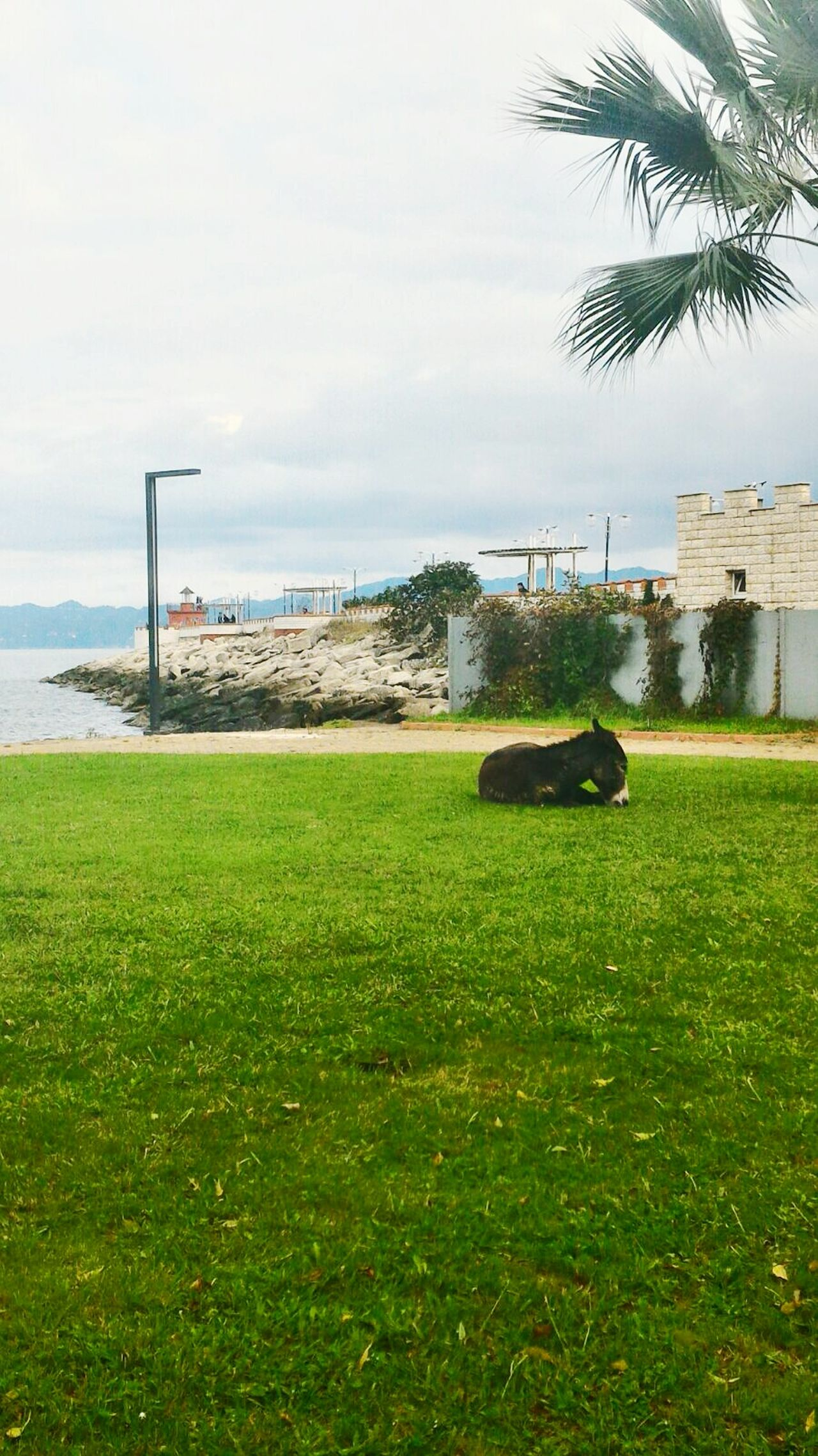Ordu FatsaSahil Donkey Seaside First Eyeem Photo Eye4photography  Eyem Best Shots Eyemphotography by Muammer Özcan