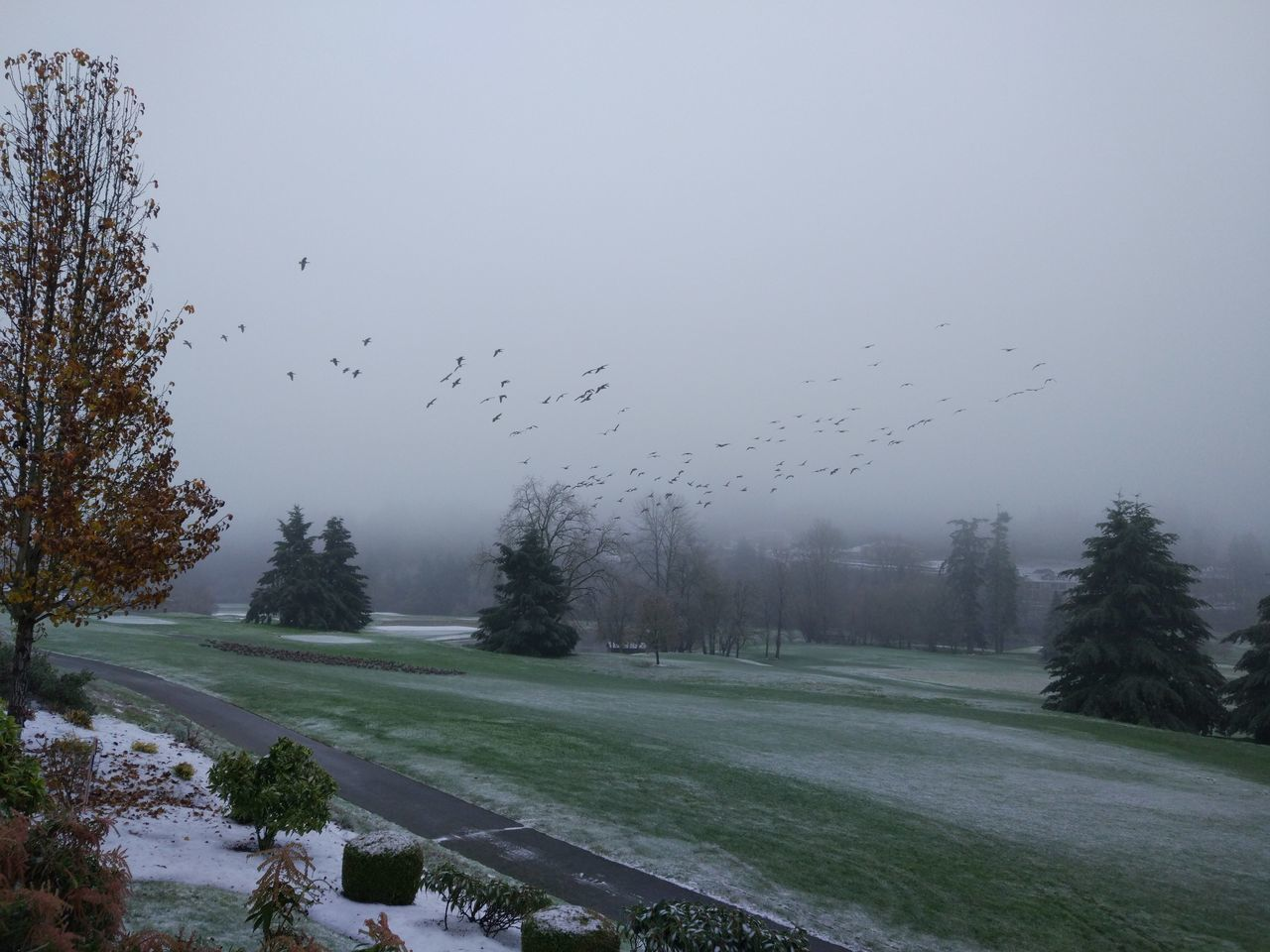 Tree Fog No People Nature Beauty In Nature Landscape Flock Of Birds Sky Outdoors Day Snow Day ❄ Snow❄⛄ Golf Club Beauty In Nature Cloud - Sky USAtrip Trees Grassfield Salem, Oregon Tree Nature Grass Gooses Family Birds Birds In Flight
