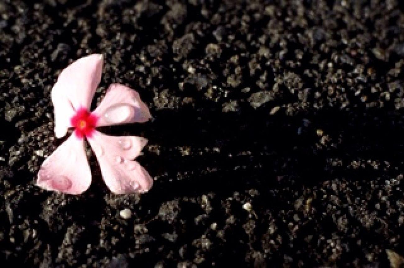 Cool 花 Flower 雫 ものおもい