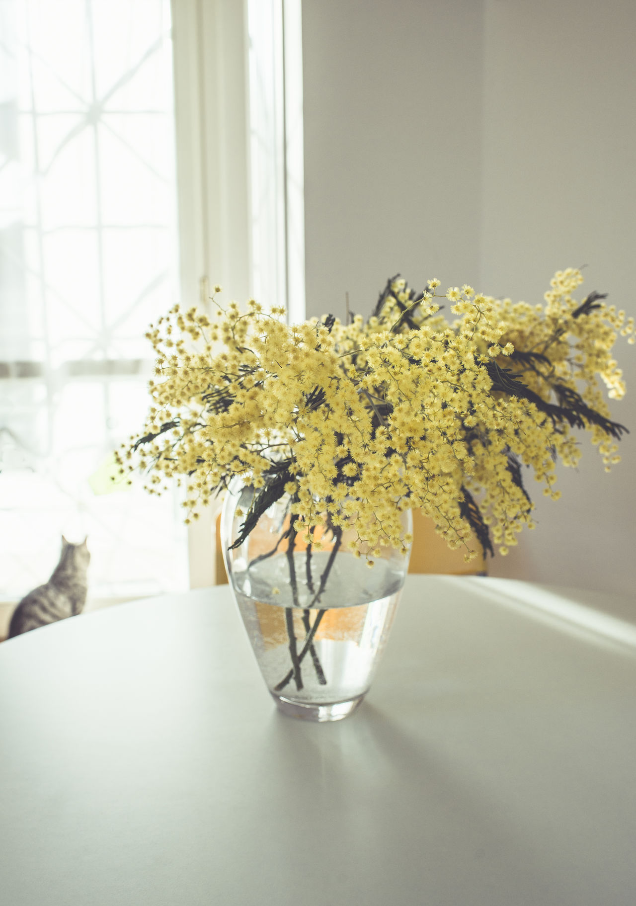 My kitchen & my cat Bouquet Cat Day Flower Flower Arrangement Freshness Glass Glass Vases Indoors  Interior International Women's Day Kitchen Mimosa Minimalism Natural Light No People Table Vase White Window Women's Day Yellow Yellow Flower