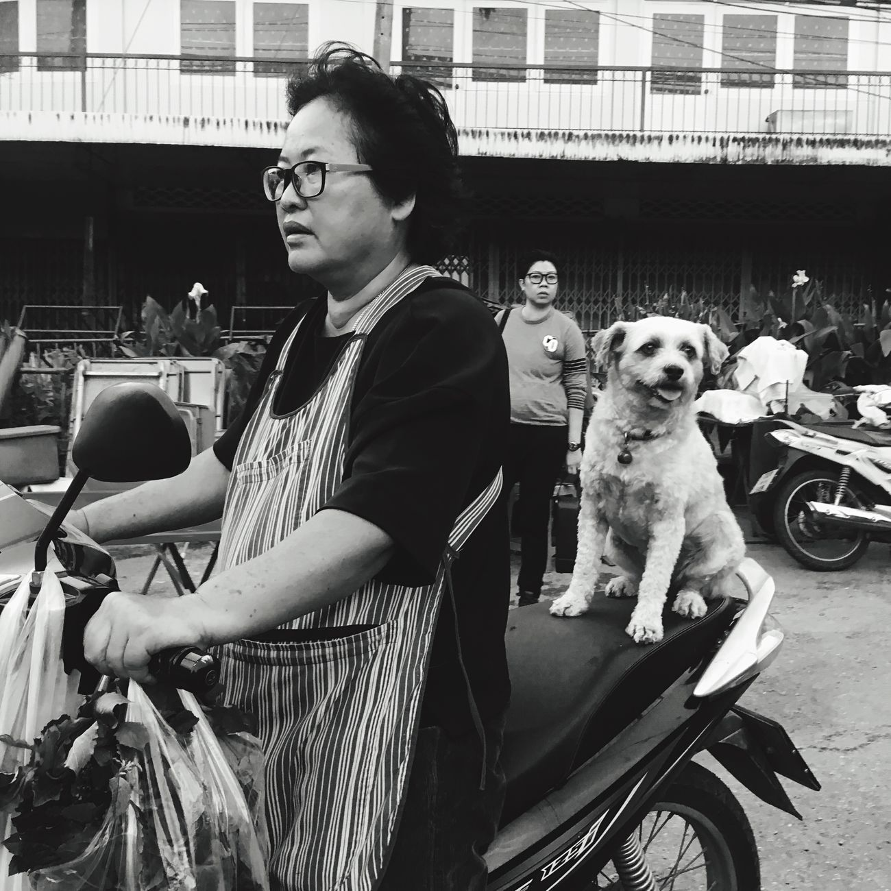 Dogs Dog Passenger Snap a Stranger Transportation Motorcycle Photography Animal Themes One Animal Pets Outdoors Monochrome People Streetphotography Market IPhone SE