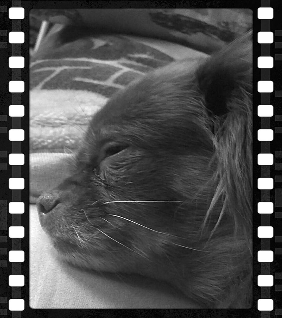 Very sick dog. Dead sons baby girl. Took eveything I had & could borrow. But, she lives when she shouldnt... Dog Dog Love Pomeranian Sickphotography Heartbreakingmoment Totally Worth It $1700 that I didnt have, I found... Wasnt ready to loose the only baby my son left me... Lovedogs Loved Sickbaby her system was shutting down and I only had access to 1/2 of the money needed for her ER surgery...(but, thanks to the beautiful people and their desire to help me find a way to save my deceased sons baby girl...) the Dr herself at Dimond Animal Hosp in Anchorage helped me, help Deb. That is something I can never forget. Deb, now edging up on 13, keeps a Grandmas Heat Happy Every Day. Animal Love Animal Caretaker Animal Children Grandmother Anchorage Alaska Veterinary Clinic 2013 This is my thank you to the most perfect Veterinarian I have met. You saw I couldnt loose her and you went so far beyond to help me find a way. Thank You! The Photojournalist - 2016 EyeEm Awards