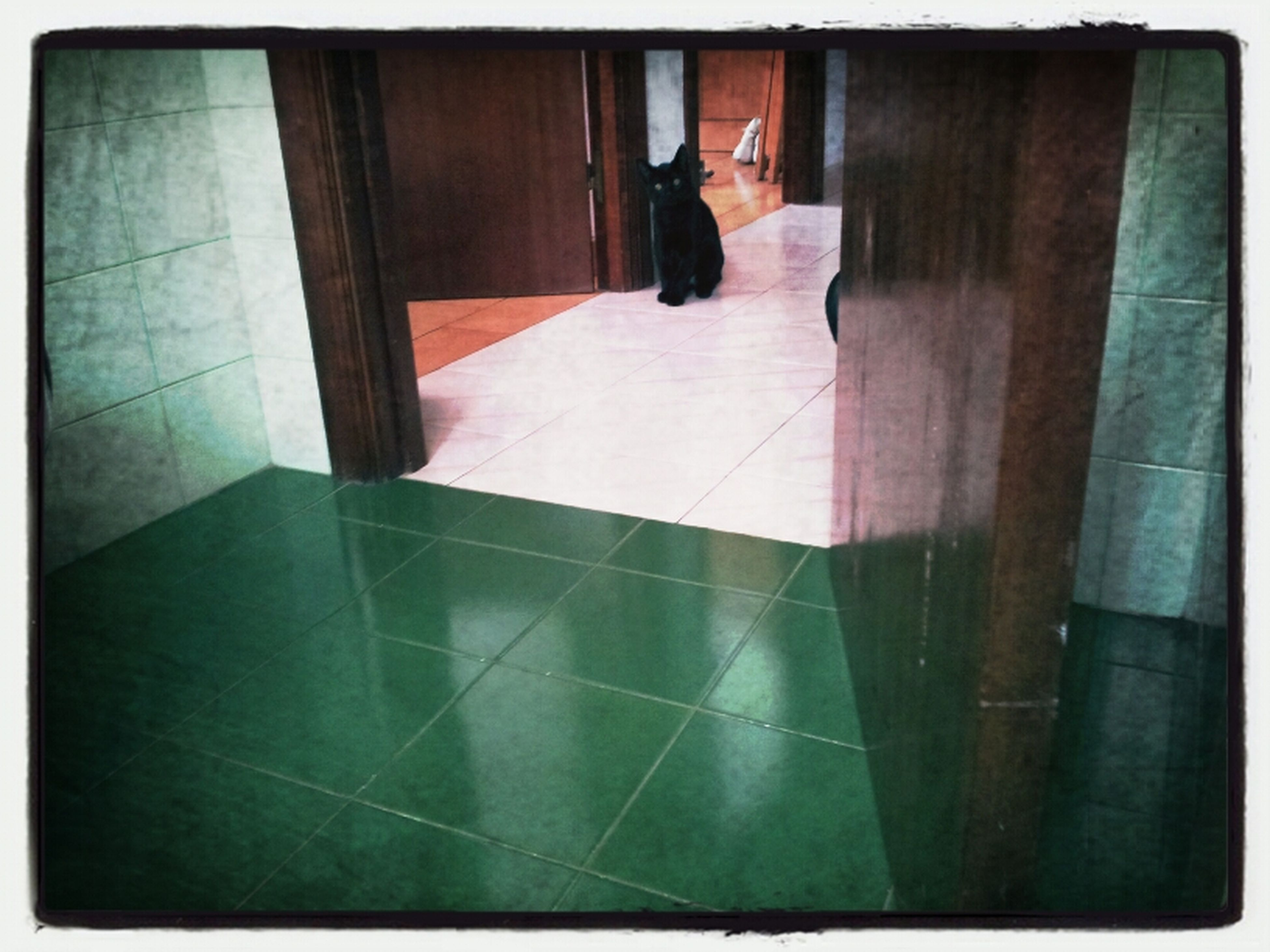 transfer print, indoors, auto post production filter, pets, domestic animals, one animal, animal themes, architecture, built structure, window, tiled floor, flooring, door, domestic cat, mammal, home interior, sunlight, cat, house, full length
