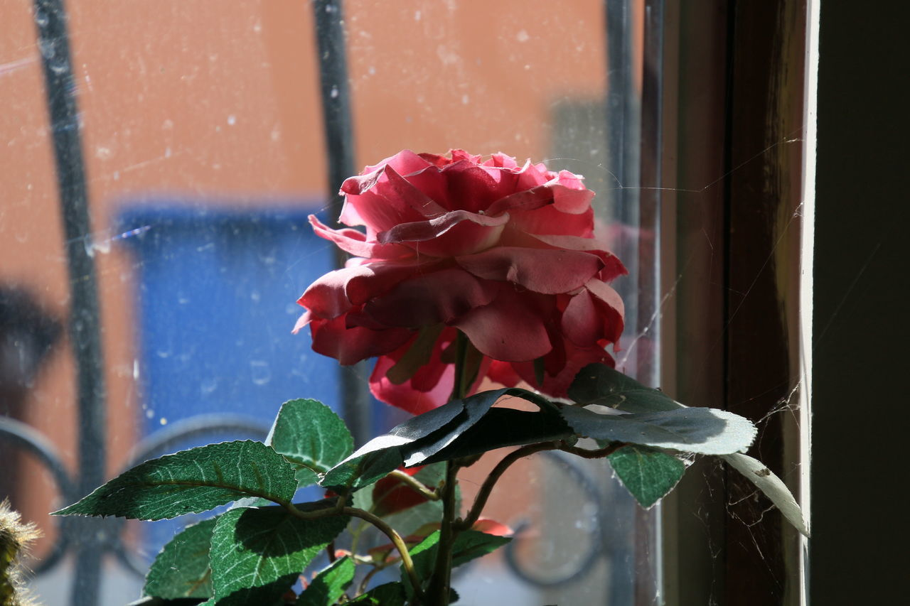 Flower Fragility Red Nature Window Flower Head Plant Leaf Beauty In Nature Growth Freshness Close-up No People Outdoors Day Maroon