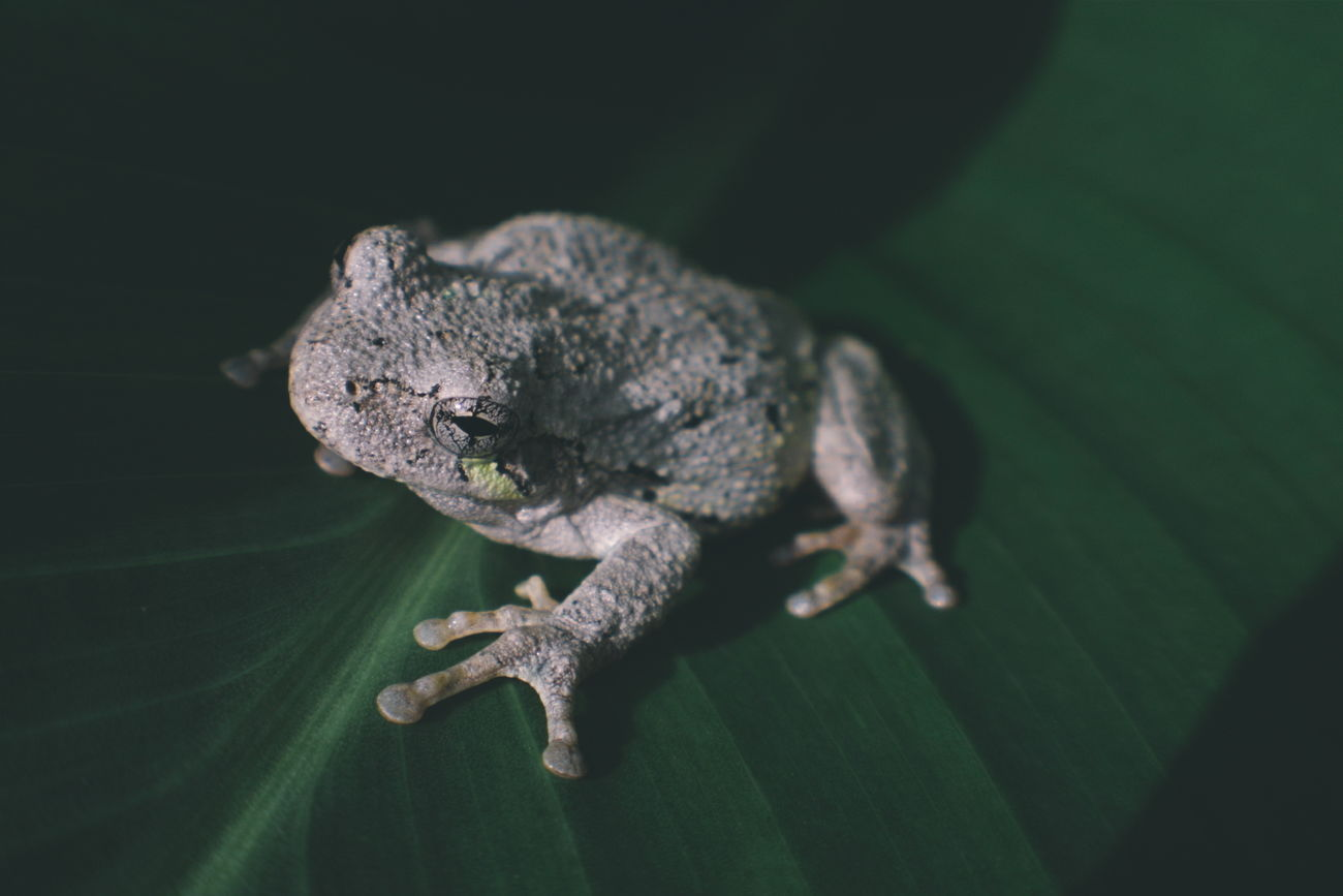 Beautiful stock photos of frosch, Animal Themes, Close-Up, Focus On Foreground, Fragility