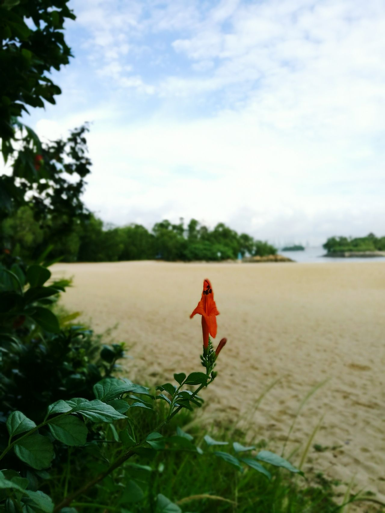 Live For The Story Flower and Beach Are  keywords for Summer Nature Sky