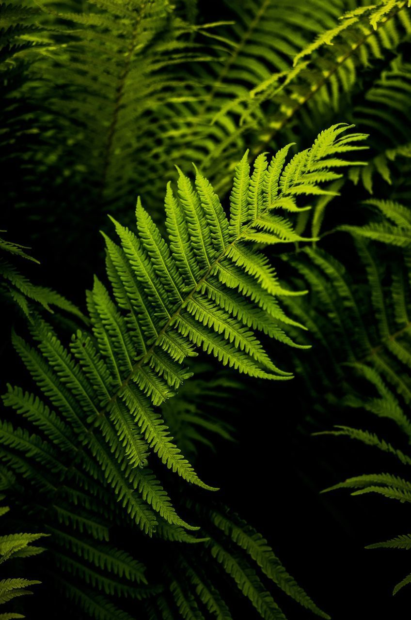 leaf, green color, nature, fern, growth, green, day, beauty in nature, plant, close-up, no people, outdoors, freshness