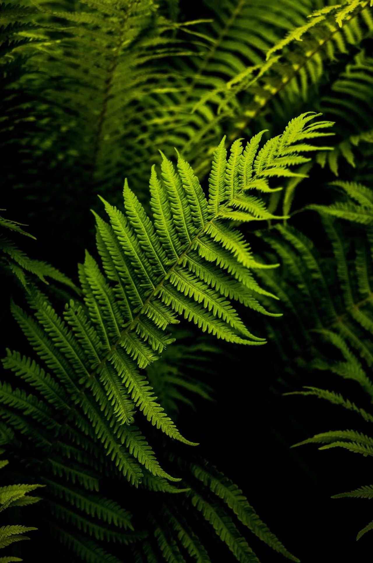 Green Color Leaf Fern Nature Beauty In Nature Plant No People