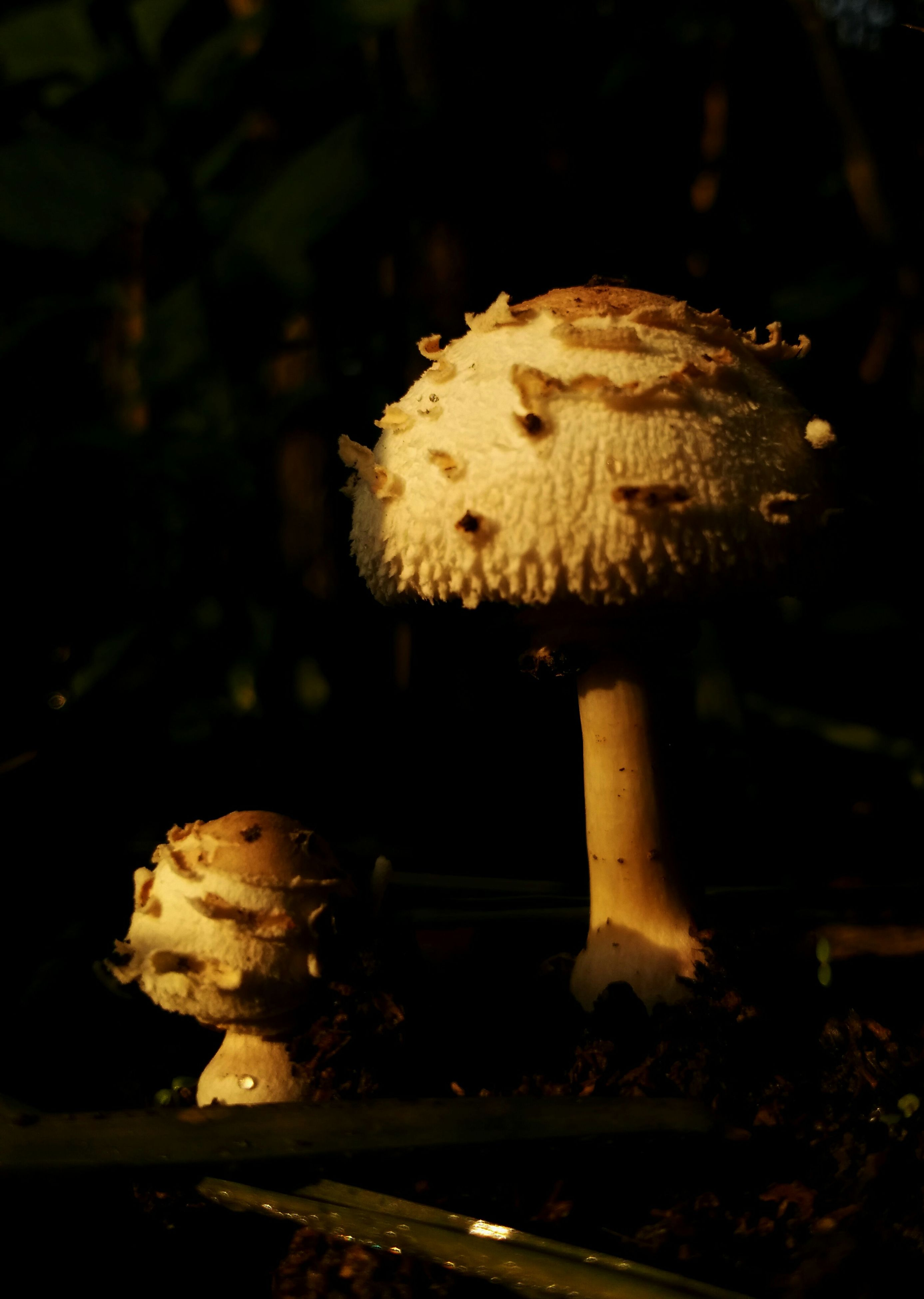 night, close-up, focus on foreground, forest, outdoors, nature, no people, wood - material, mushroom, selective focus, dark, fungus, one animal, high angle view, leaf, rock - object, wildlife, tree stump, damaged