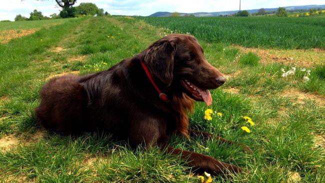 Orki Nature Animals I Love My Dog Dog