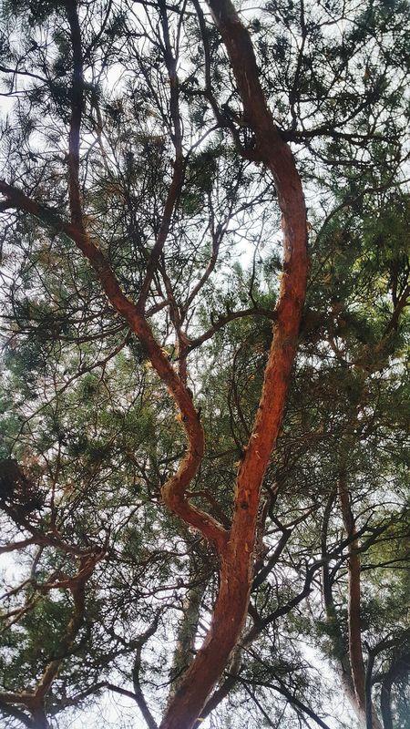 дерево ветви ствол ствол дерева Природа осень Tree Treebranches Treebranches Sky Nature Autumn Autumn🍁🍁🍁
