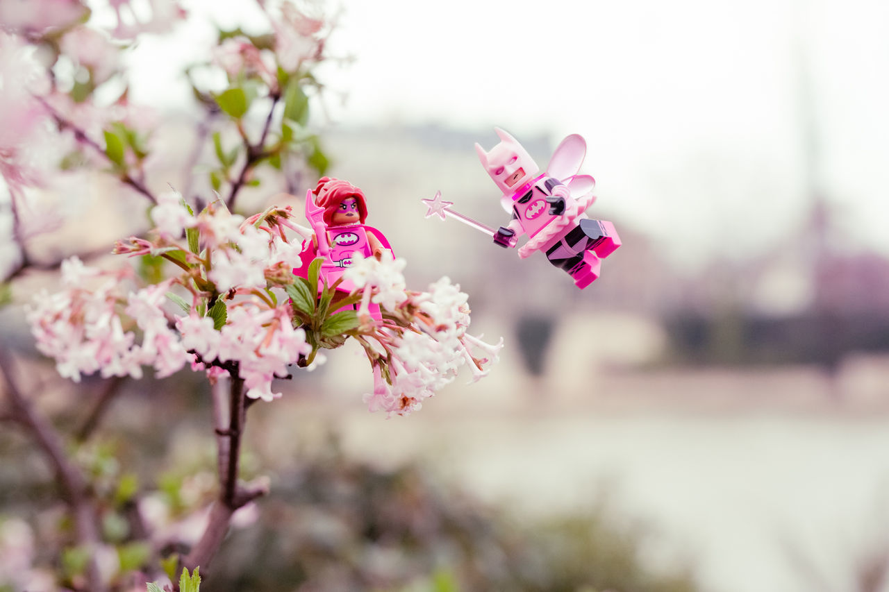 Batman Flower Nature Pink Color Tree Cherry Blossom Plant Springtime Beauty In Nature No People Blossom Fragility Branch Outdoors Day Insect LEGO Canon Photographie Spring Paris LegoBatman Freshness