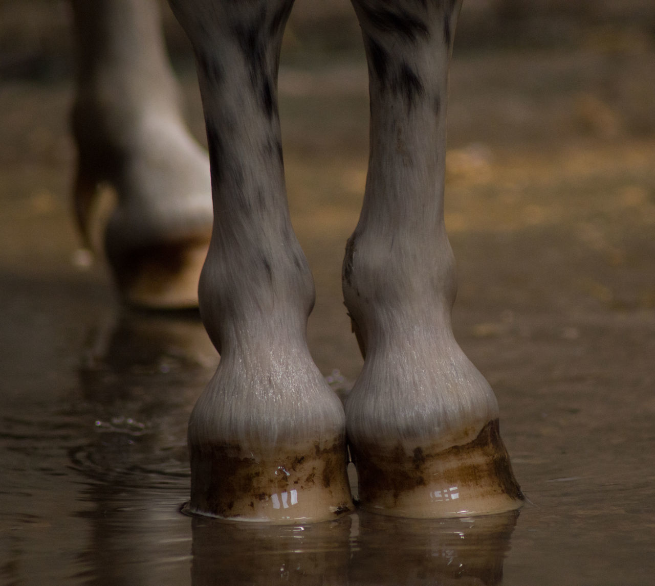 Chute Cleaning Day Feet Girl Horse Shoes Horse, Pferd, Ride, Riding, Outdoor Love ♥ Lovely Petting Pony Pony❤️ Washing