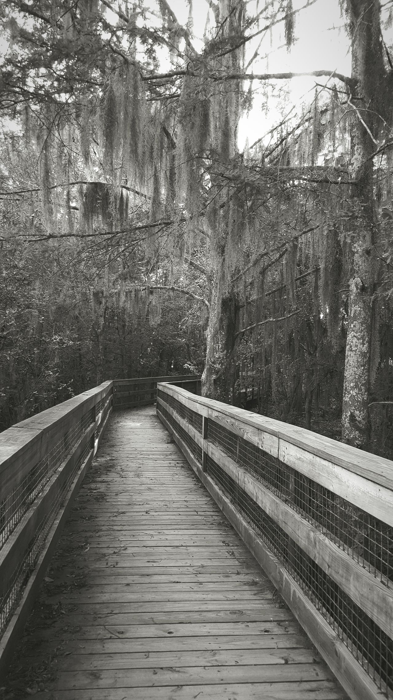 Black Bayou observation deck Swamp Swamplife Spanish Moss Louisiana Louisiana Swamp Louisianaphotography