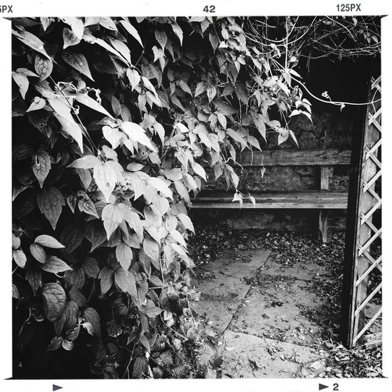 Monochrome Beauty In Decay KCe Wicked Benches