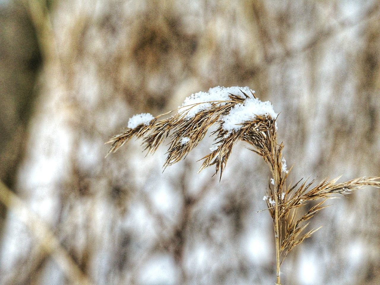 Nature Plant Growth Close-up Outdoors No People Beauty In Nature Day Snow Covered Winter Nature Outside Winter Time Frozen Nature Beauty In Nature Cold Temperature Nature