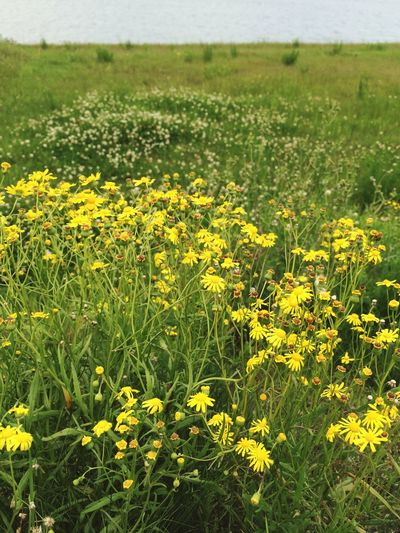 IPhoneography 徳島県 日本の春 Landscape