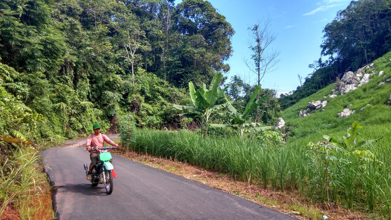 going to the farm Adult Adults Only Beauty In Nature Day EyeEmNewHere Leisure Activity Men Motorcycle Nature One Person Outdoors Paddy Field People Real People Rice Paddy Riding Road Trip Scenics Sky The Way Forward Tree
