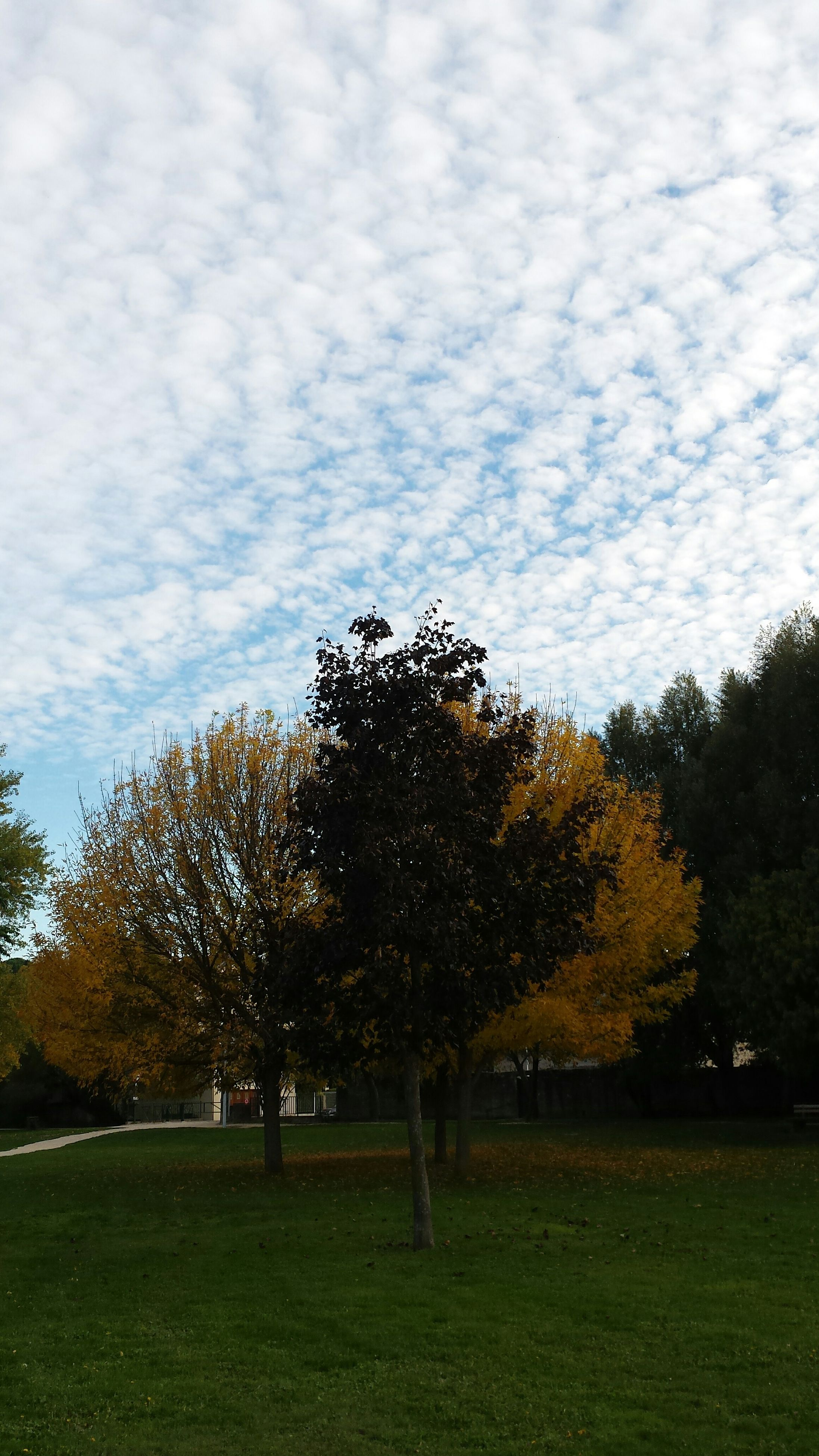 tree, sky, tranquility, tranquil scene, cloud - sky, grass, beauty in nature, autumn, scenics, landscape, nature, field, growth, change, cloudy, park - man made space, cloud, branch, grassy, season