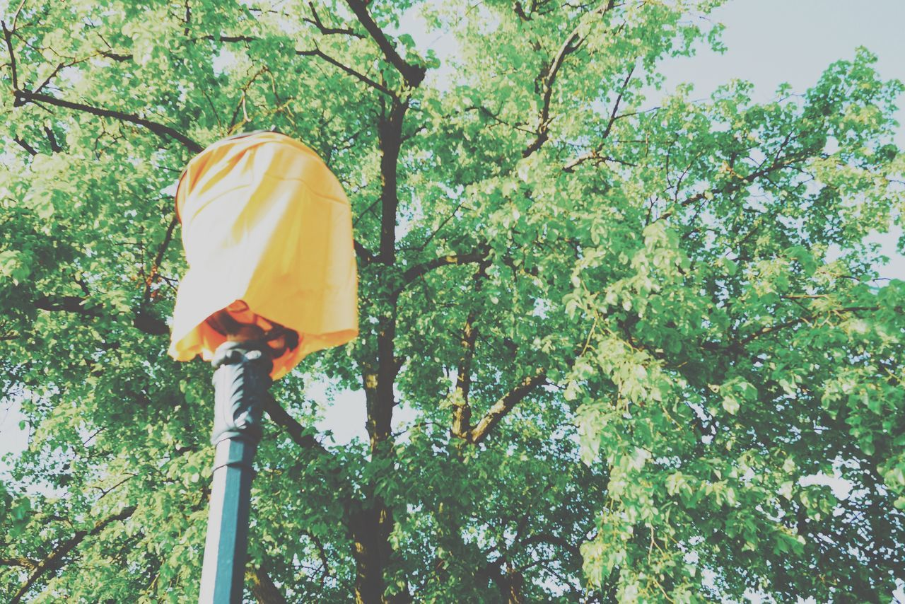 Tree Low Angle View Day Green Color Yellow Branch Outdoors Nature Growth No People Beauty In Nature Close-up Abstract Abstraction Lamp Lamp Post Growth Tree