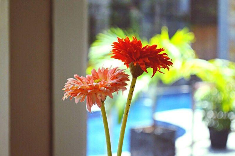 Taking Photos EyeEm Flower Swimming Pool Grand Nanggroe