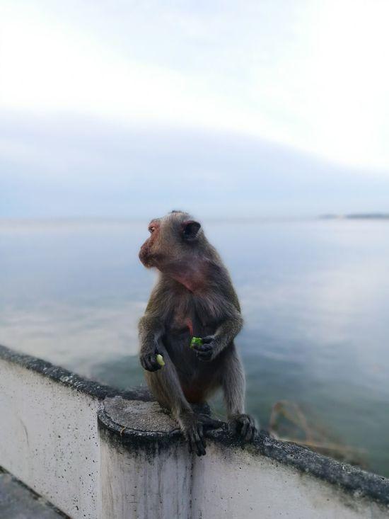 Beachy monkey 1 Monkey Beach Bangsean Chonburi Thailand HuaweiP9 Leica Lens