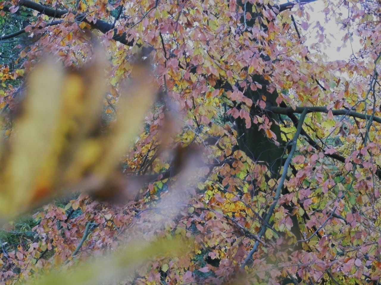 leaf, autumn, nature, growth, no people, day, outdoors, beauty in nature, plant, lichen, branch, close-up, tree, fragility